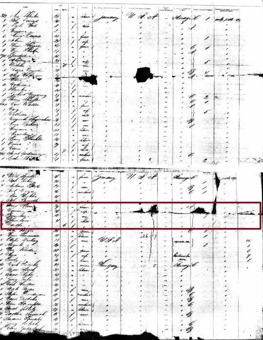 1888 Klein ship manifest marked